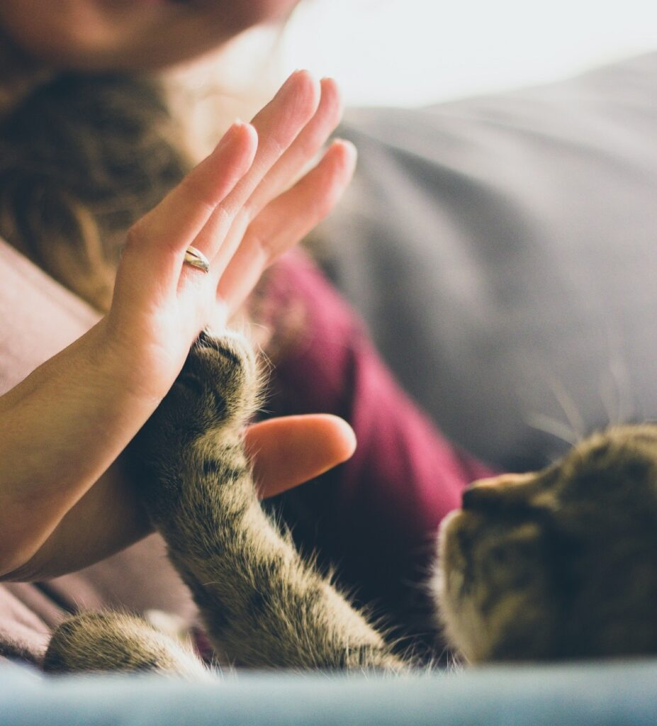 how to relieve stress: play with your pet